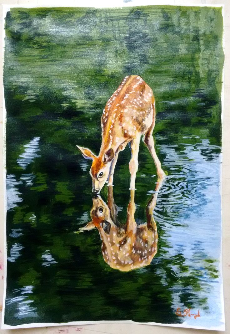 Deer drinks water in deep forest stream Deer painting