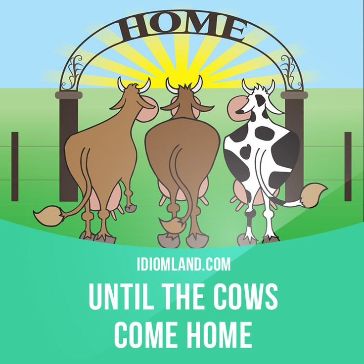 """Until the cows come home"" means ""for a very long time"". Example: We could talk about this problem until the cows come home, but it wouldn't solve anything. #idiom #idioms #slang #saying #sayings #phrase #phrases #expression #expressions #english #englishlanguage #learnenglish #studyenglish #language #vocabulary #dictionary #grammar #efl #esl #tesl #tefl #toefl #ielts #toeic #englishlearning"