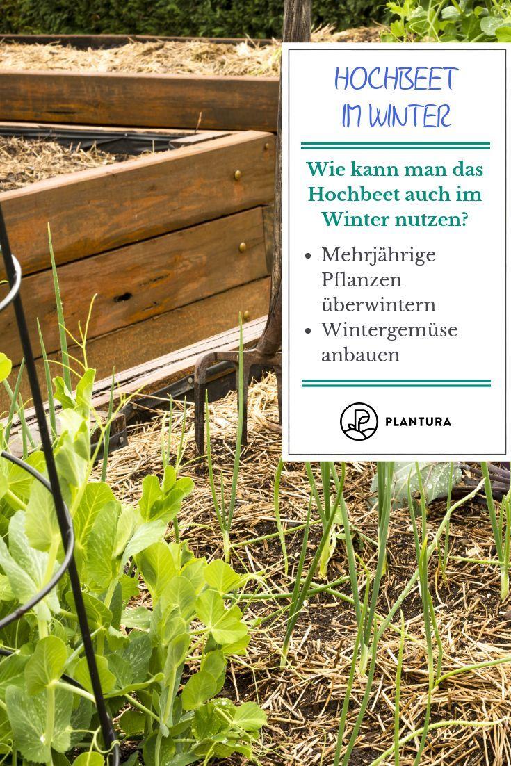 Hochbeet Im Winter Nutzen Ideen Tipps Hochbeet Pflanzen Gartentipps