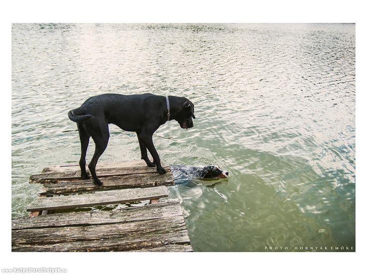 Kutyás helyek - Borostyán-tó - kutyabarát vízpart/strand  #valódi #kutyabarát #strand #borostyántó #zalalövő #hungary #magyarország #kutyabaráthelyek #dogfriendly #petfriendlyplaces #petfriendly #places #hornyakphoto
