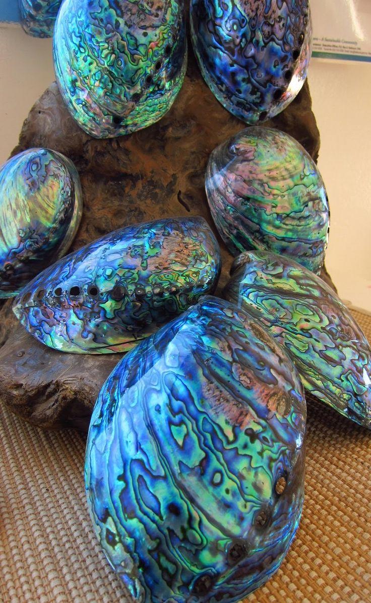 Paua shells - Aotearoa