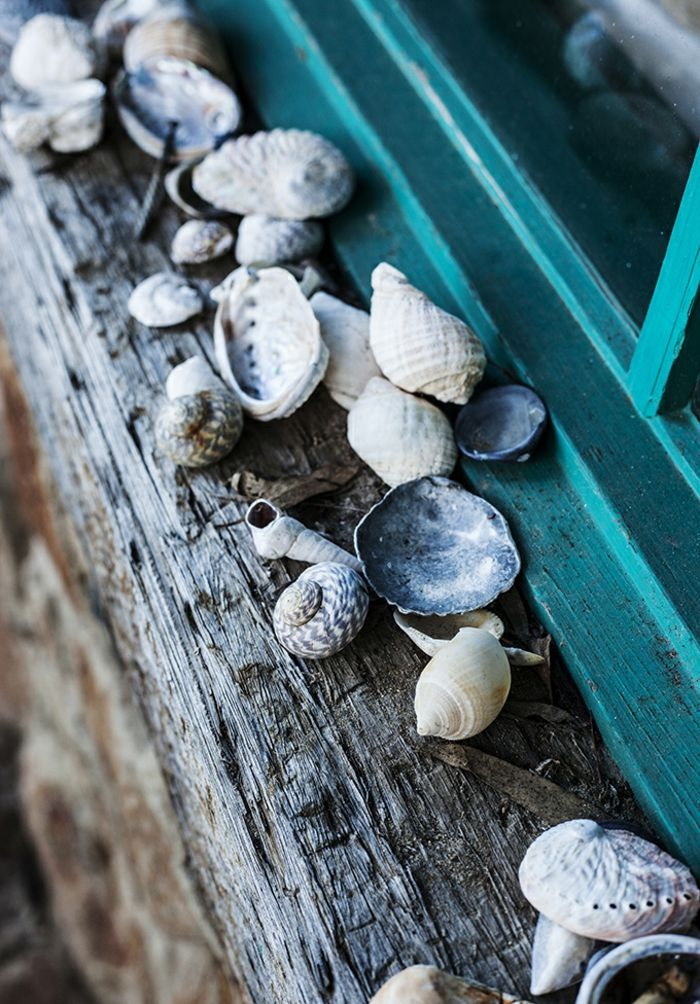 summer diys, many seashells in different colors, shapes and sizes, strewn on rough wooden windowsill, near turquoise window pane
