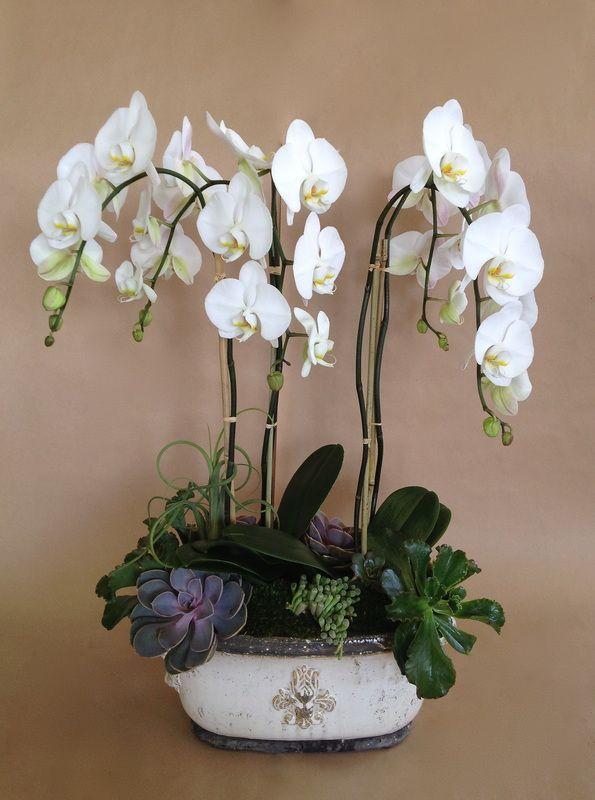 Orchid and succulent arrangement.