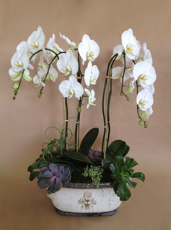 Orchid and succulent arrangement. | Gardens, Plants and ...