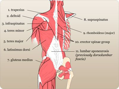 14 best Anatomy, Pathophysiology, and Disease Processes images on ...
