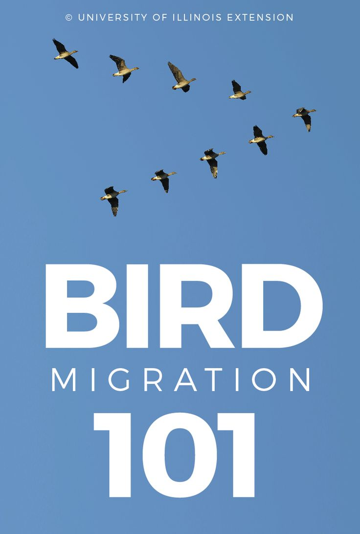 have you ever been curious about how and why birds migrate this blog