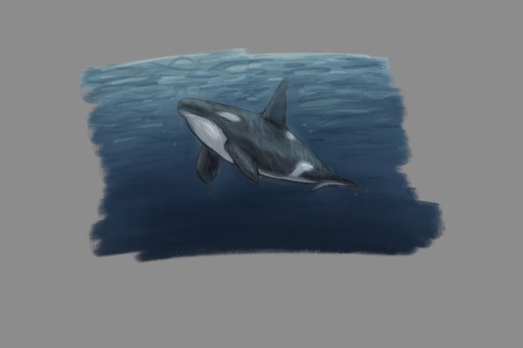 Orca under water; drawings by ArtWolf