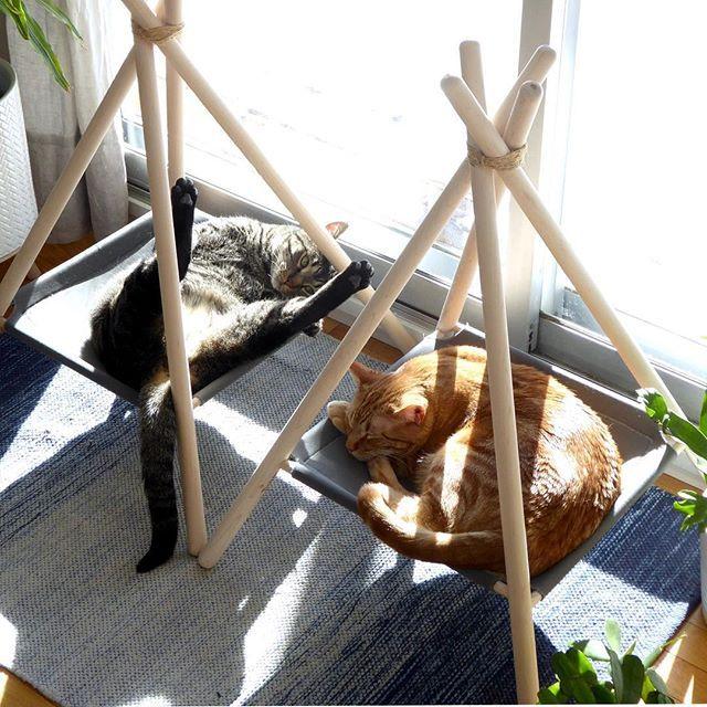Katzen zu haben bedeutet regelmäßige Exposition gegenüber. Ist das TMI für Sie? Dann werden Sie es zu schätzen wissen, wie ich die Kamera in dieser Aufnahme positioniert habe.
