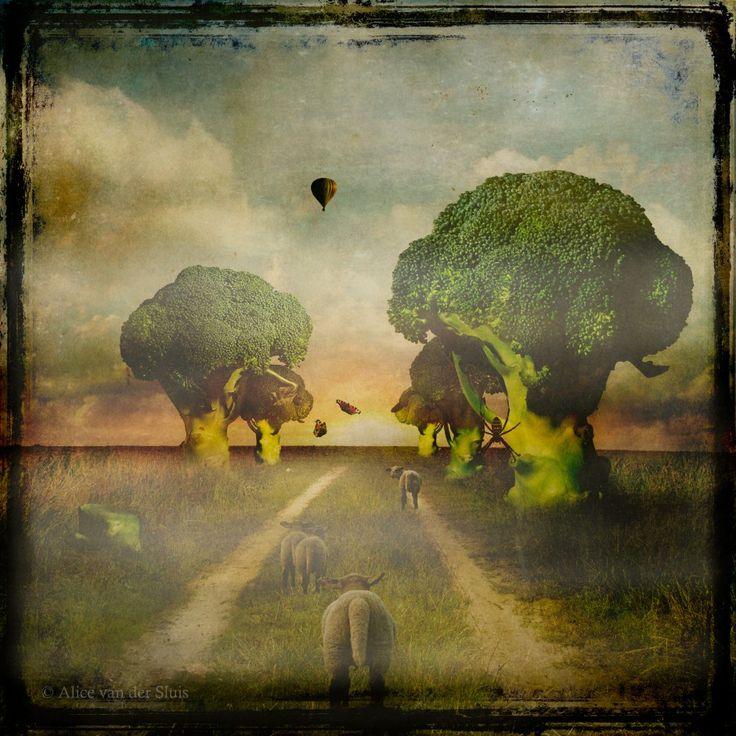 The freedom of Alice van der Sluis's mind – Ovalme