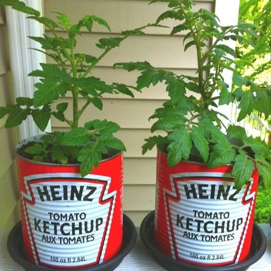 Superior Grow Patio Tomatoes In Ketchup Cans! Cute Idea.GUESS THIS COULD ALSO WORK  WITH