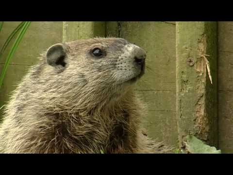 Kid friendly and interesting Groundhog video