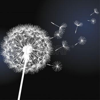 dessin noir et blanc: pissenlit fleur blanche sur fond noir Vector illustration