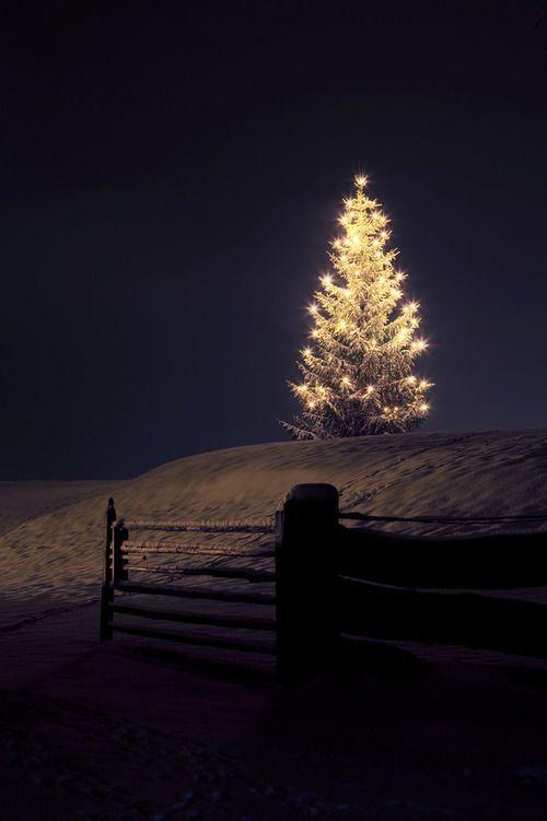 lit up christmas tree Oh hey, December.