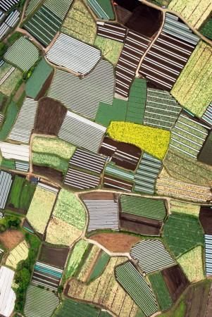 見てください、このきれいなパッチワーク! ・・・じゃなくって、これは田んぼの風景なのです。それも、日本の。 とても綺麗だと思いませんか?? かぼ...