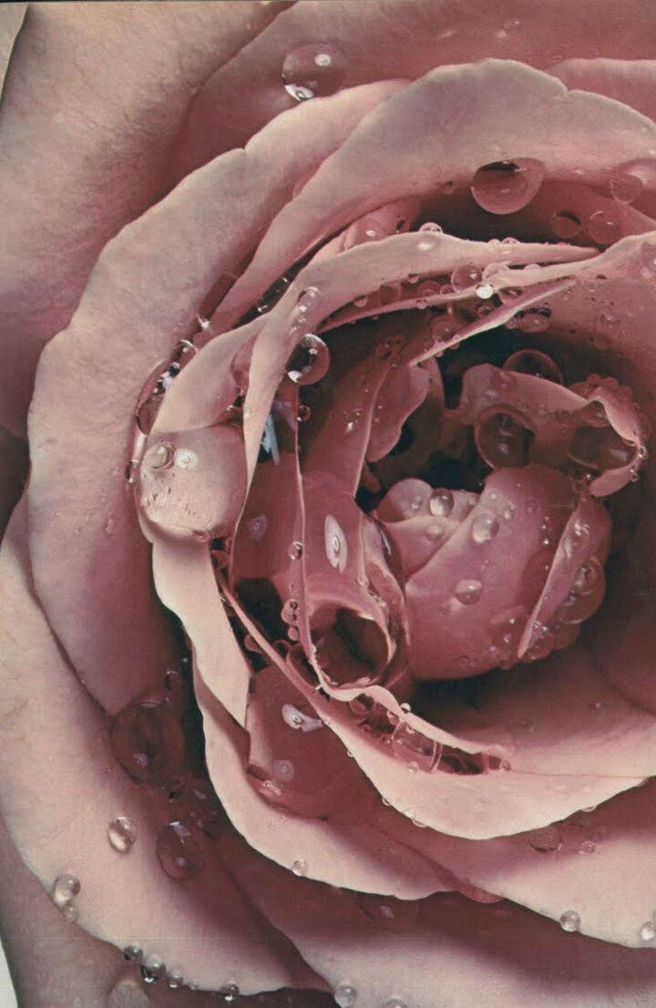 пепел розы картинки обеспечивает комфортный