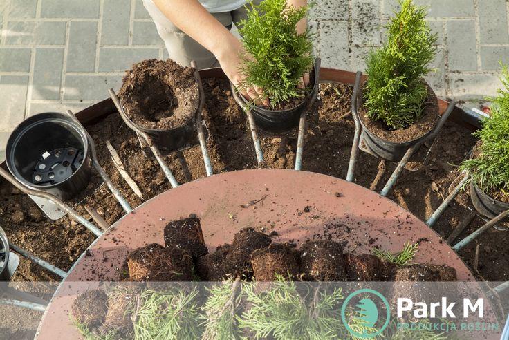 Najwyższa jakość materiału roślinnego