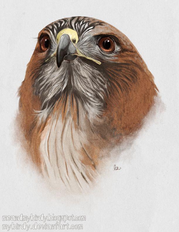 148 Best Red Tail Hawk Tawodi Images On Pinterest Birds Of Prey