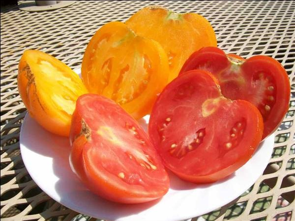 98 best images about pomodori tomatoes on pinterest