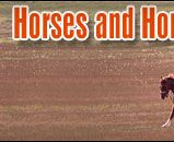 Types of Equine Breeds:       1.Coldbloods - Larger, gentle horses for working or hauling.      2. Hotbloods - Swift, fast horses used for racing and speed.      3. Warmbloods - Great breed for equestrian sports and competitions.