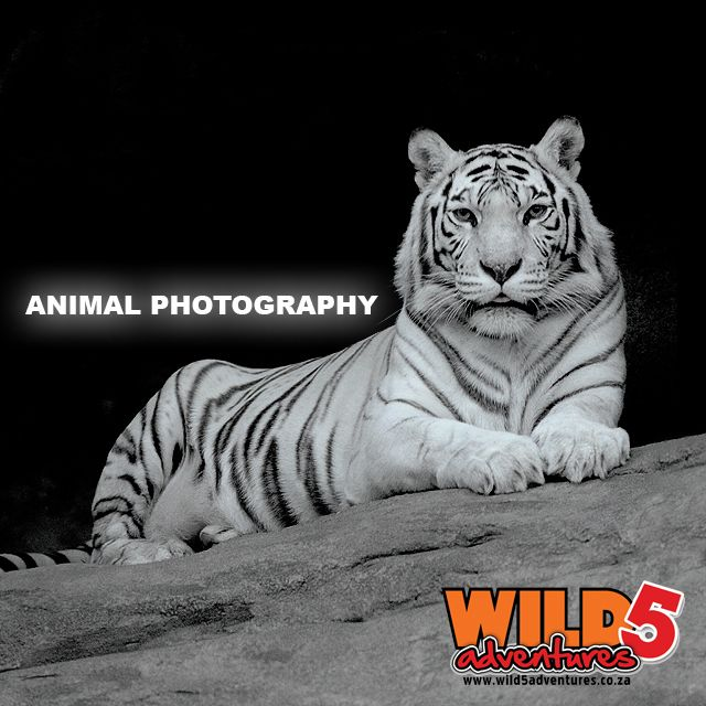 Follow these 10 tips to Perfect animal photography: Know the rules #Photography http://bit.ly/1Mqzipd