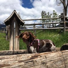 Seinen Urlaub in vollen Zügen genießen zu können, heißt für einige unter uns auch seine Haustiere mit dabei zu haben. Urlaub mit Hund in den Dolomiten.