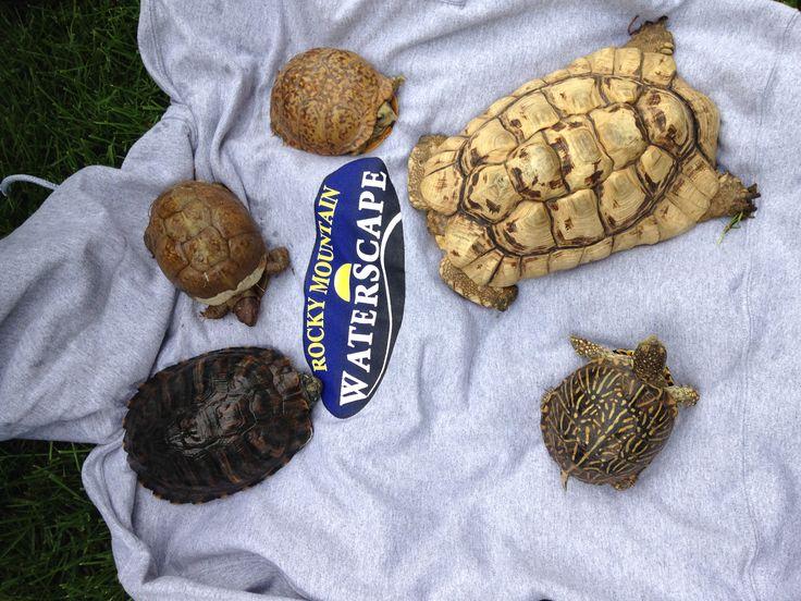 Got Turtles?