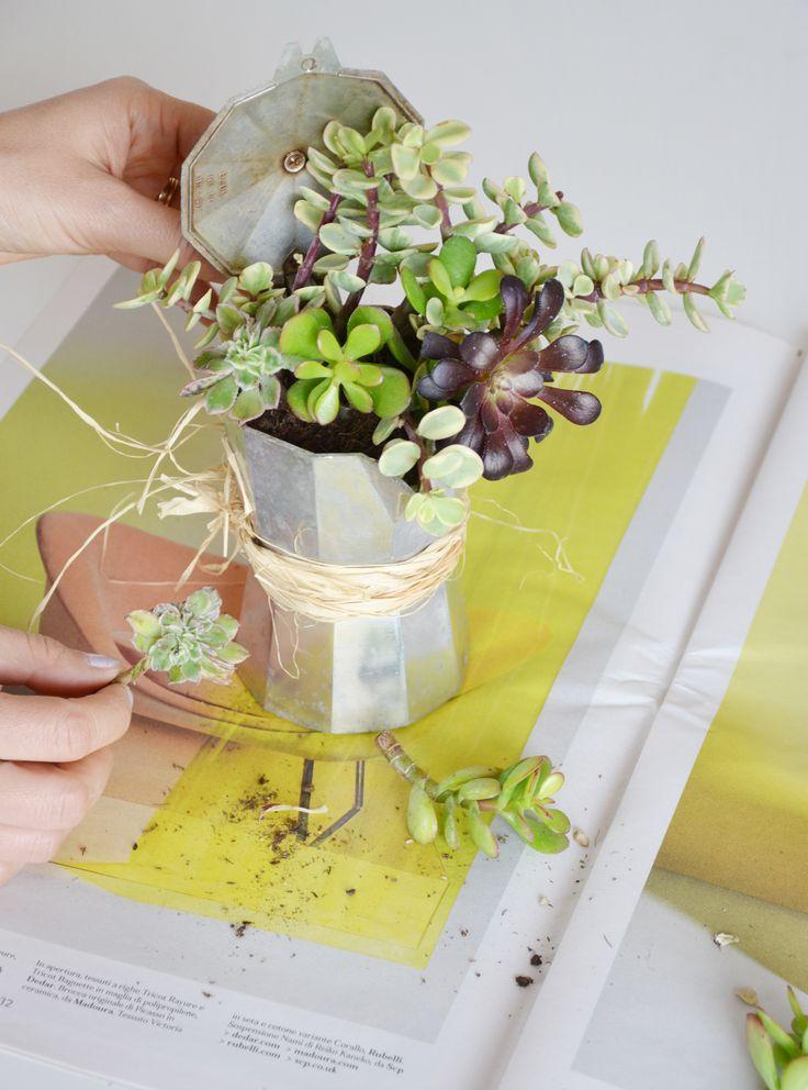 Estremamente Oltre 25 fantastiche idee su Contenitori per piante grasse su  LV55