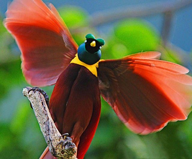 райские птицы красивые фото кто представительниц прекрасного