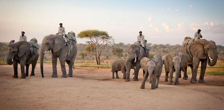 Pilanesberg Elephant Back Safari