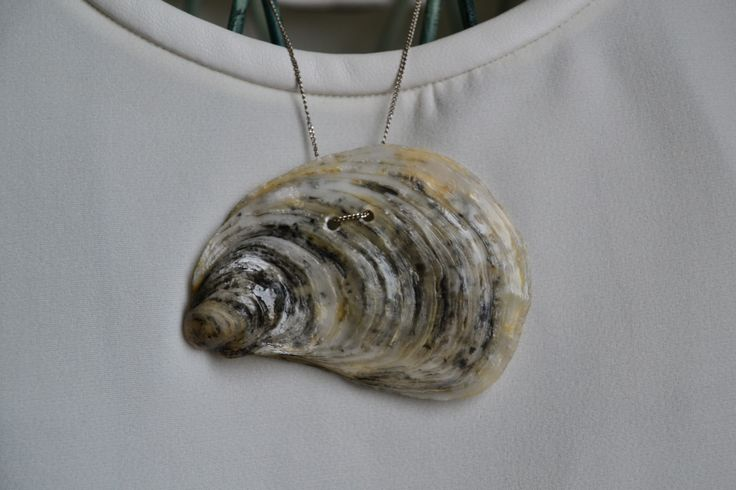 oyster, treated and lacquered
