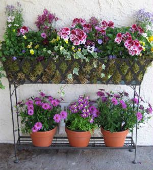Potted Garden Flowers 743 best container garden glory images on pinterest | flowers