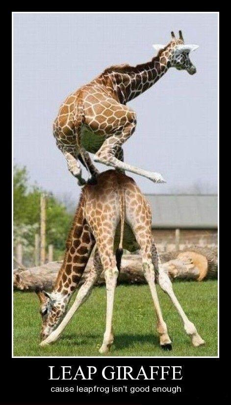 Leap giraffe
