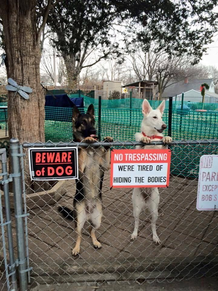 """Beware of Dog"" signs.jpg (720×960)"