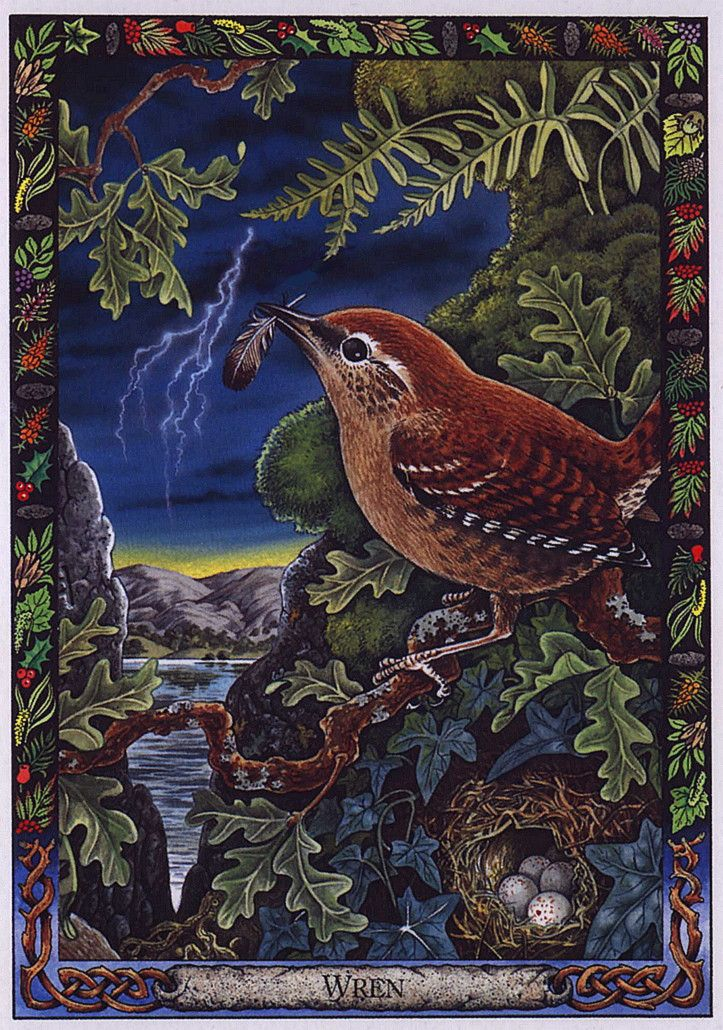 17 Best Images About Druid Animal Oracle On Pinterest