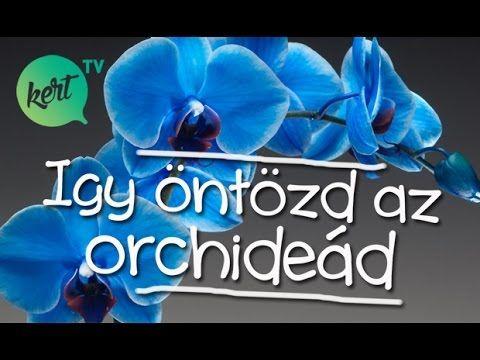 Így öntözd az orchideád