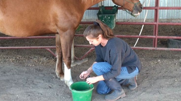 Using essential oils for hoof soak as natural thrush remedy - Heavenly Gaits Equine Massage natural horse health tips