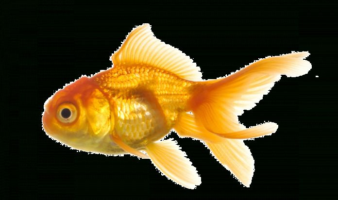 15 Fish Png No Background Image Icon Transparent Background Png