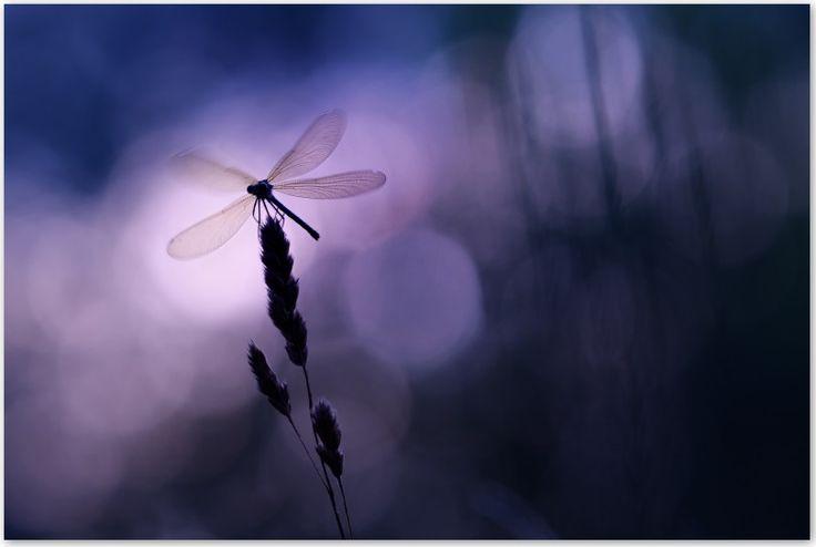 """[SUR MOSTRA] """"Fly me to the blue"""" de Gil Gautier en vente sur Mostra Oeuvre de l'exposition """"De l'ombre à la lumière"""" Festival Phot'Aubrac 2016 (22-25 Sept) Tirage en édition limitée, qualité musée, contrecollé sur Dibond  #fineart #photo"""