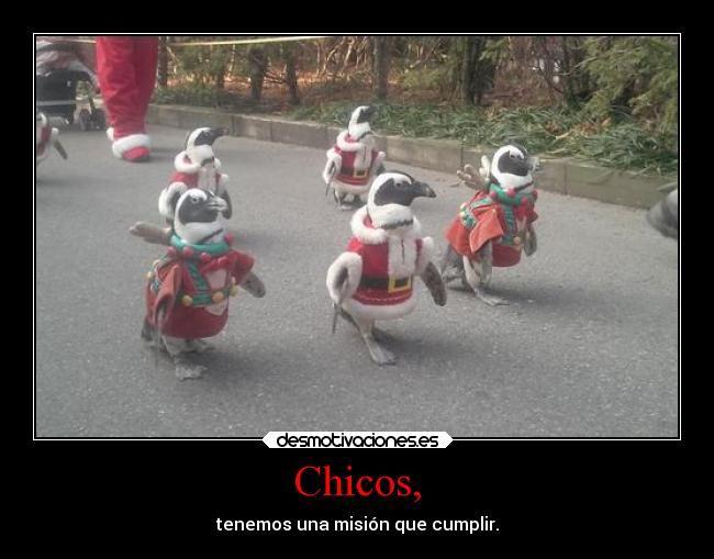 fotos de risa pinguinos navidad