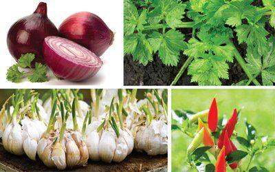 Sayur dan Rempah yang Cocok Ditanam di Rumah