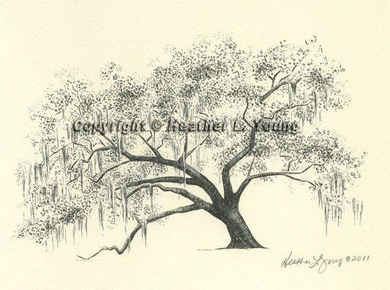 live oak tree drawing ford plantation gateway oak by theinklab 3000