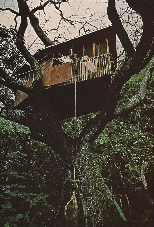 302 best images about treehouse ideas on pinterest for Treeless treehouse