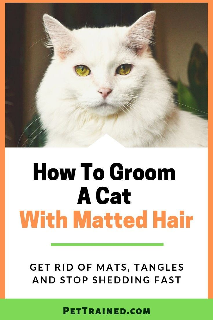 fb775e3e8d6587ff82155eb9c4a55508 - How To Get Knots Out Of A Long Haired Cat