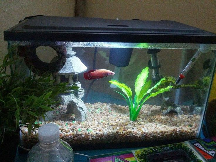 1000 images about fresh water aquariums on pinterest for Beta fish tanks