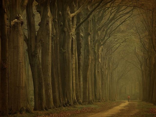 that's my kind of walk.     Credit: larsvandegoor.com