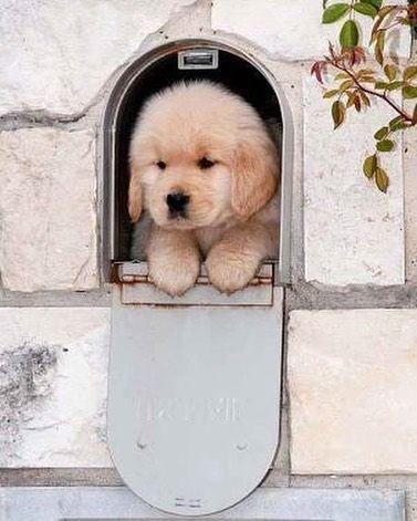 Qué tal esta sorpresa que apareció en el correo!  by perros.ig