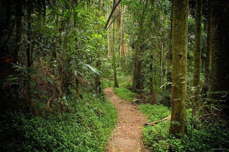 A Little Walking Track On Mt Tamborine, Australia [5184 × 3456] [oc]