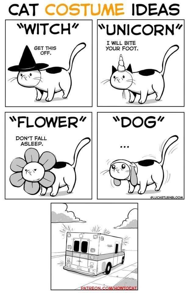 25 Very Real Cat Comics For Your Caturday Pleasure Cat Comics