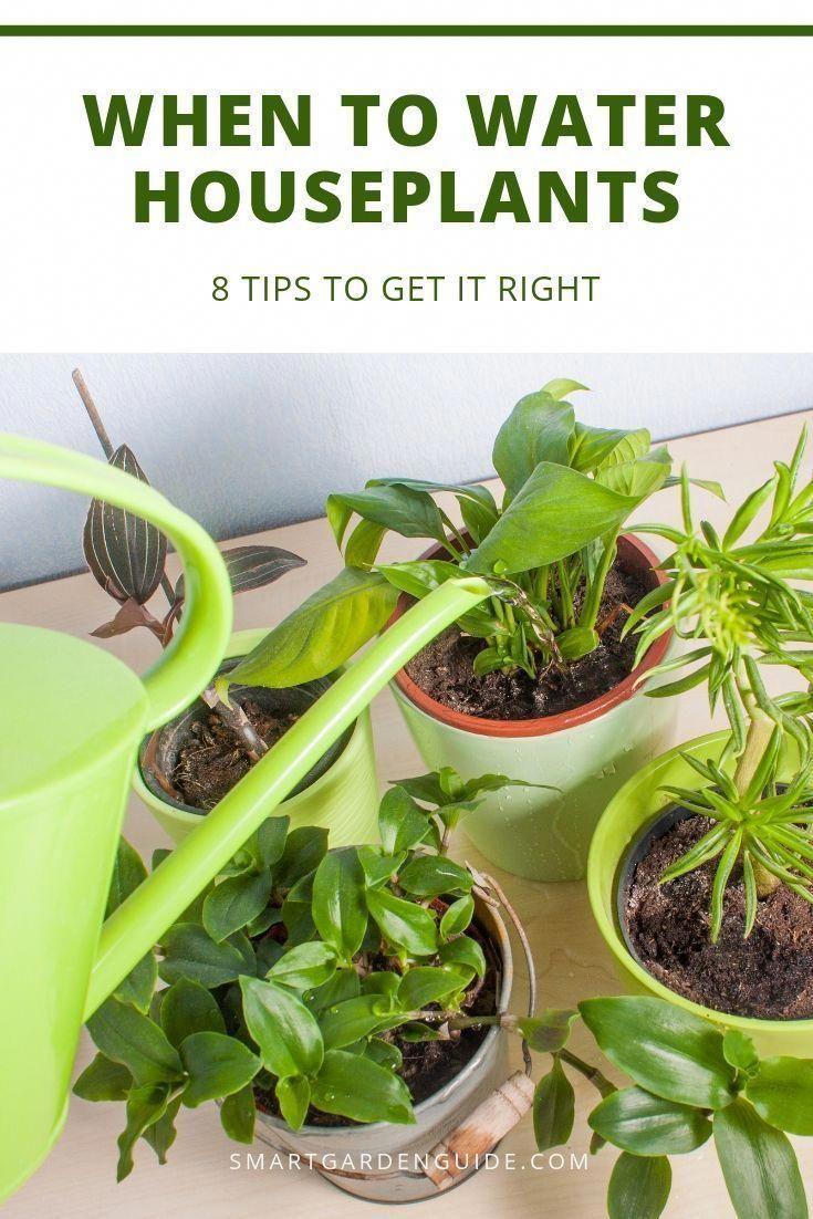 How often should you water houseplants houseplant