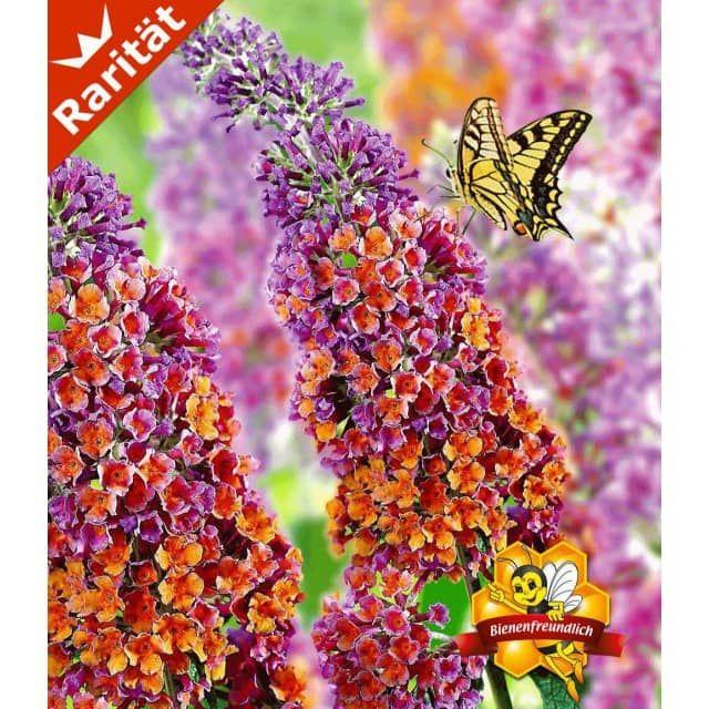 36 best Vorgarten images on Pinterest Gardening, Landscaping and